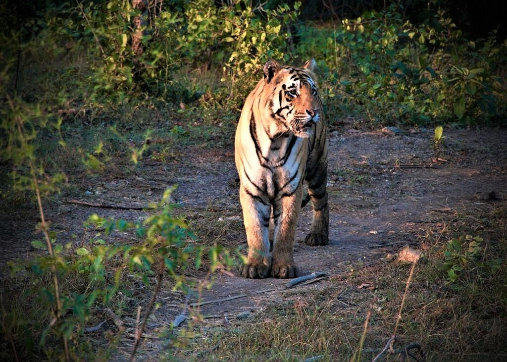 Tadoba National Park is one of the best places to visit in Nagpur